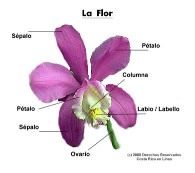 Caracteristicas de reproduccion sexual y asexual en plantas