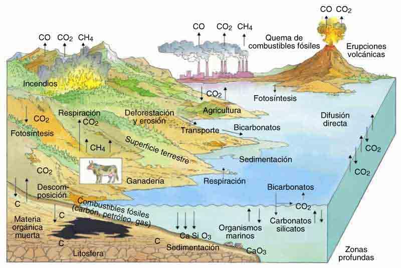 'Cicles biogeoquímics'