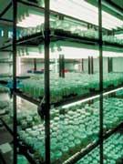 'Cultivo in vitro'