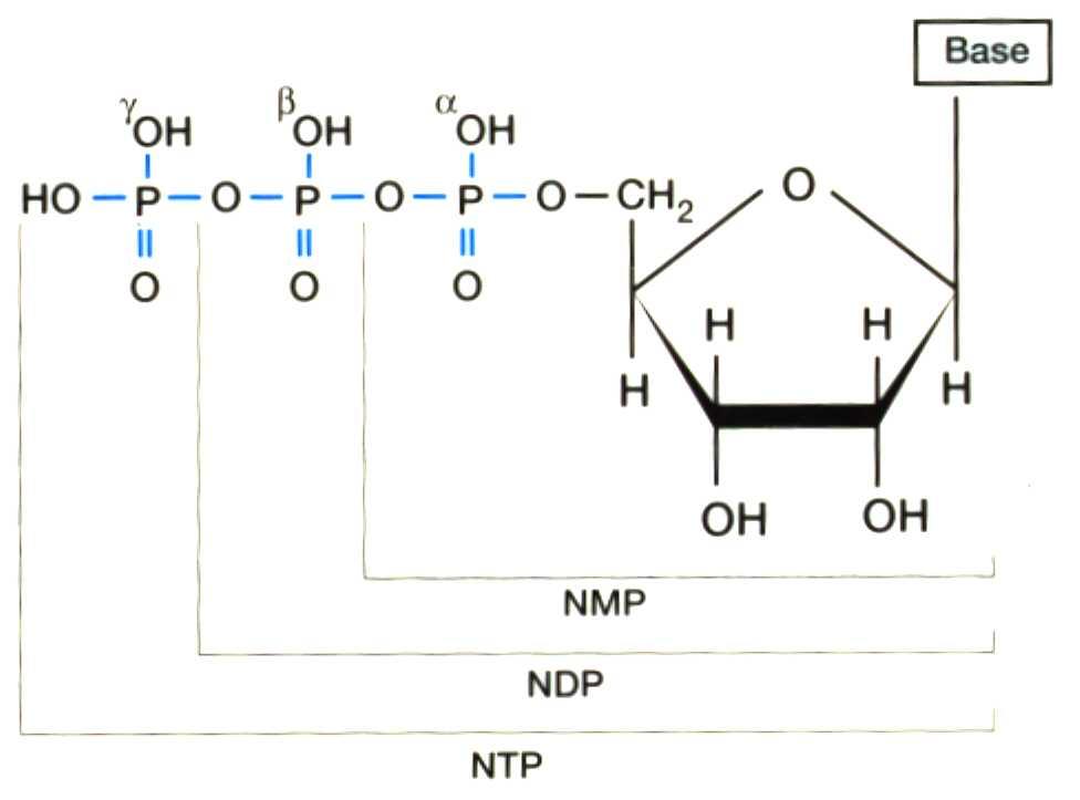 '�cidos nucleicos'