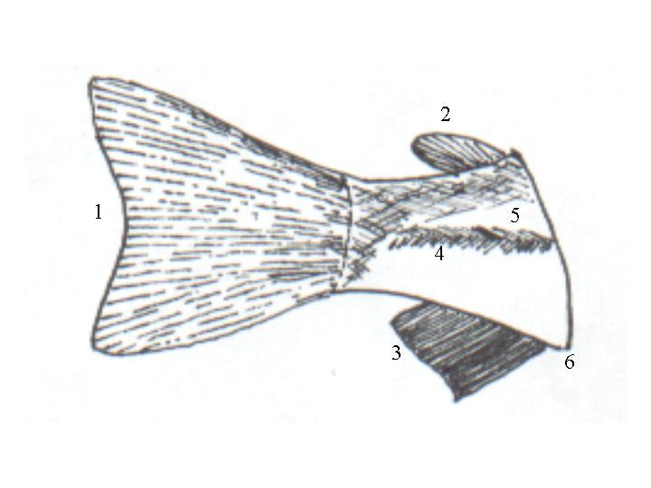 'Disección de una Trucha Arcoiris'