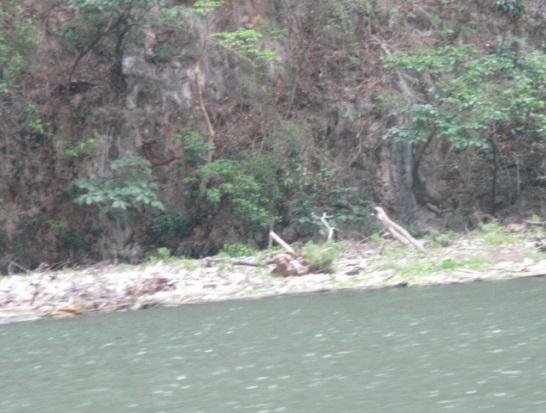 'Contaminaci�n del agua en el embarcadero de Amiku ubicado en Chiapa de Corzo, M�xico'