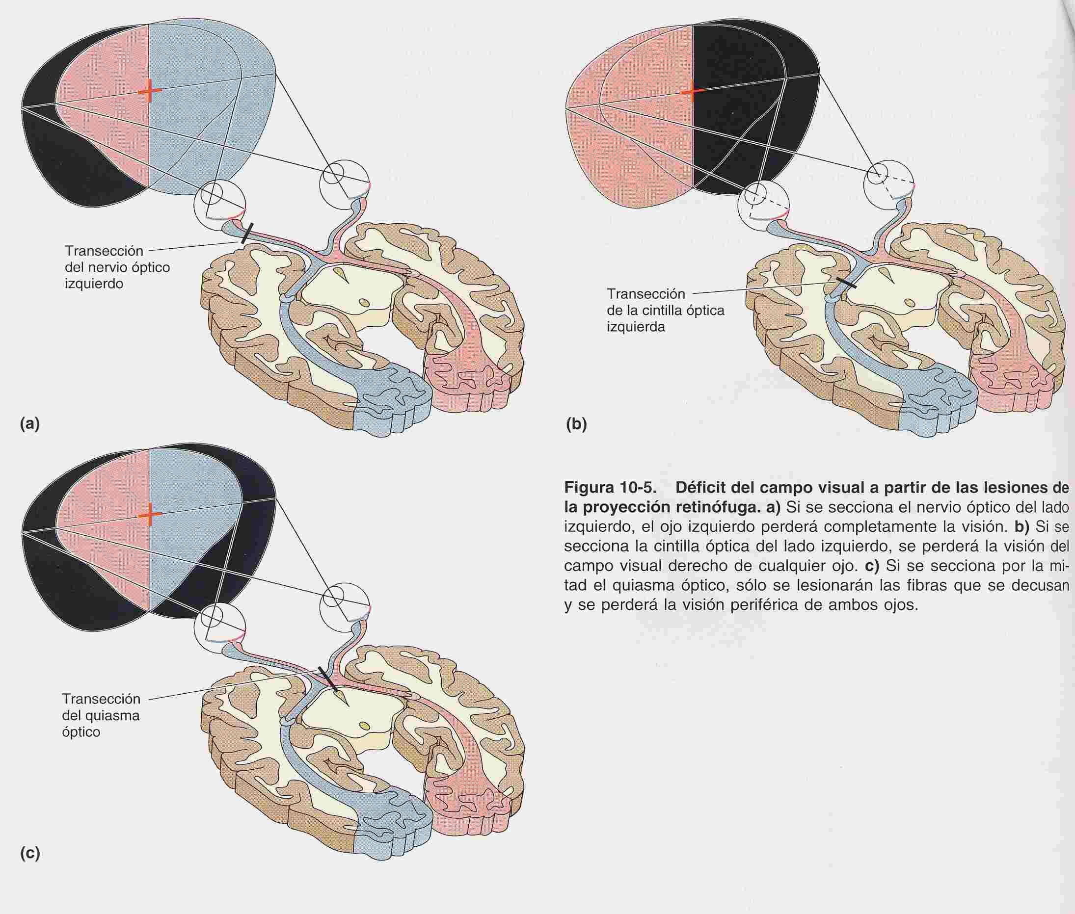 Sistema visual y ocular