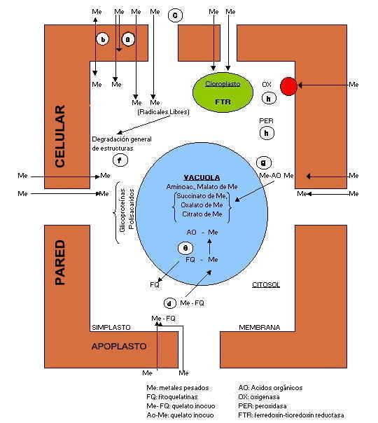 'Mecanismos de defensa en plantas'