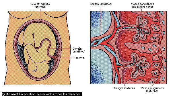 Encuentra aquí información de Sistema urinario y reproductor ...