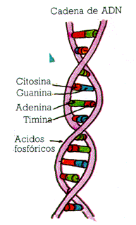 'Bioquímica'