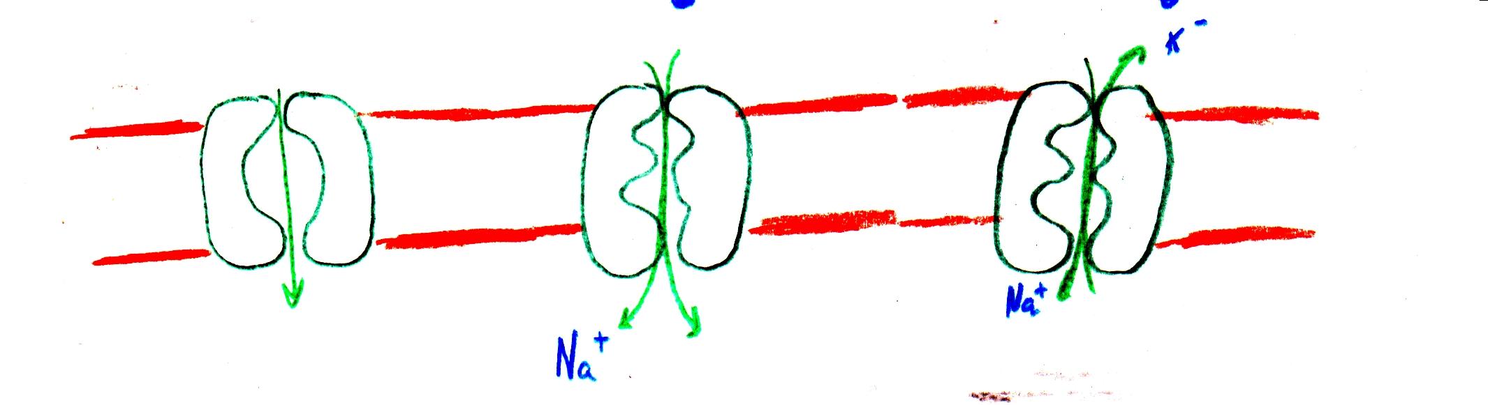 Fisología, Semilogía y Patología Ocular