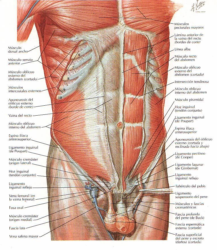 Encuentra aquí información de Columna vertebral para tu escuela ...