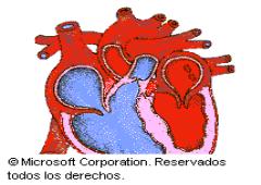 El corazón y sus enfermedades