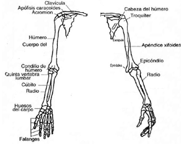 Encuentra aquí información de Anatomía para tu escuela ¡Entra ya ...