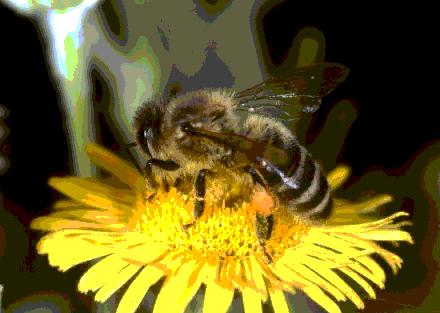 Observació d'insectes a laboratori # Observación de insectos