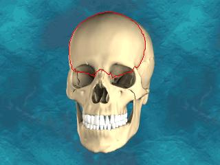 Sistema óseo