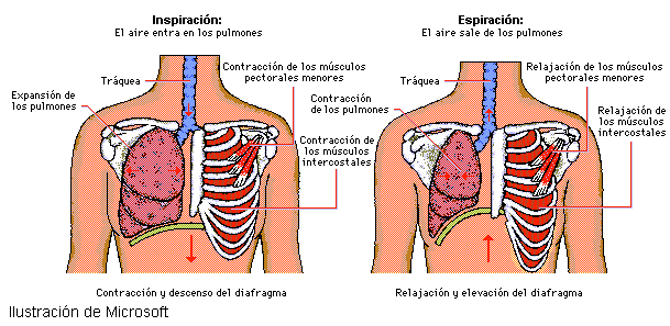 'Fisioterapia respiratoria'