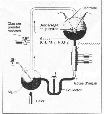 Biosfera y organización estructural y funcional de los organismos