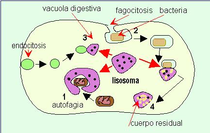 'Biología celular y genética médica'