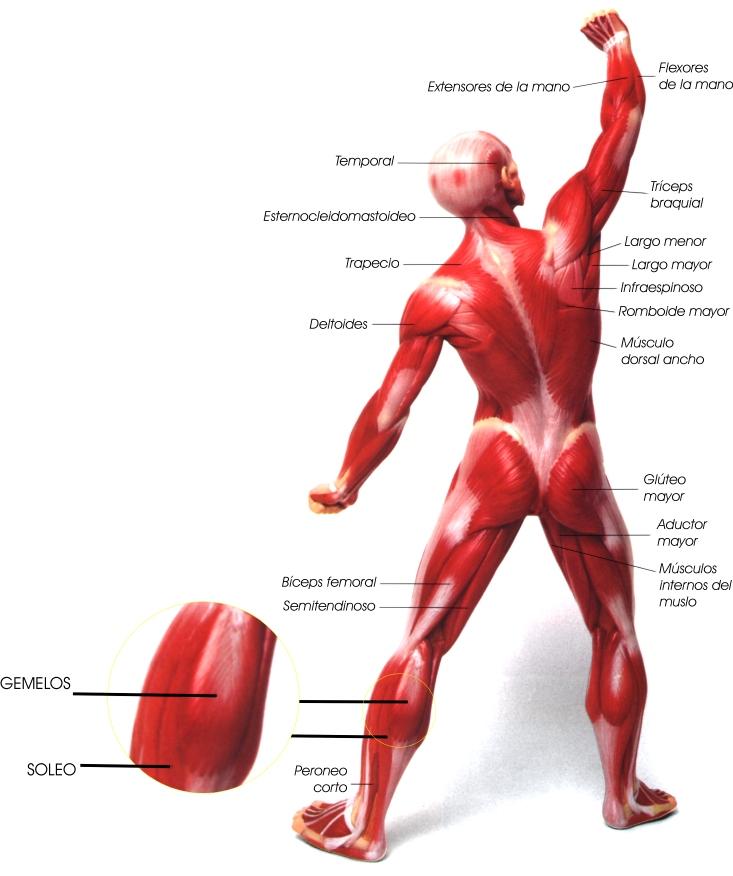 Encuentra aquí información de Anatomía y Fisiología General para tu ...