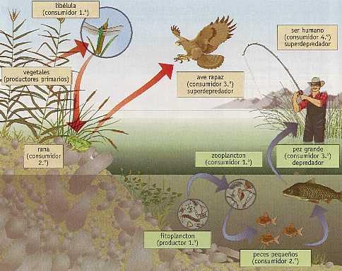 Ecosistema: estructura
