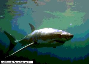 'Tiburones'
