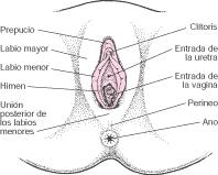 Aparato reproductor y enfermedades