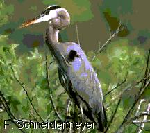 Ría de Ribadeo: Especies migratorias