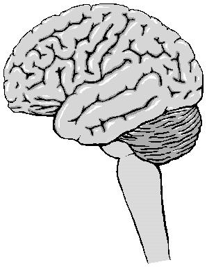 Sistema nervioso central y periférico