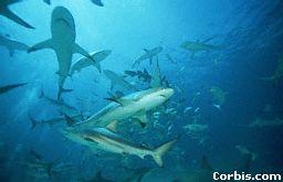 Etología de los tiburones