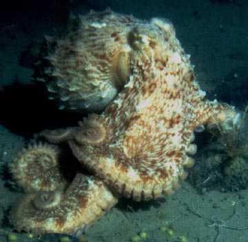 Mollusks arthropods # Moluscos