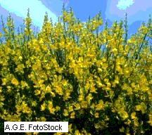 Flora del bosque de ribera