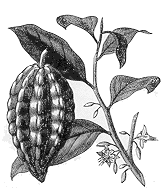 Alcaloides en el reino vegetal