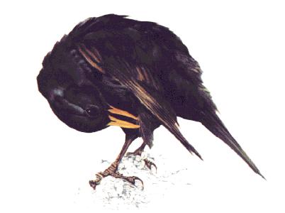 Aves de Galicia